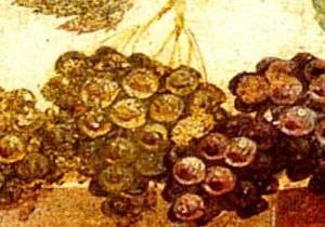 Grappoli d'uva dipinti in un antico affresco parietale