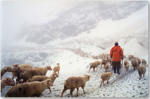 The Shepherds Way - © Dima Gomberg