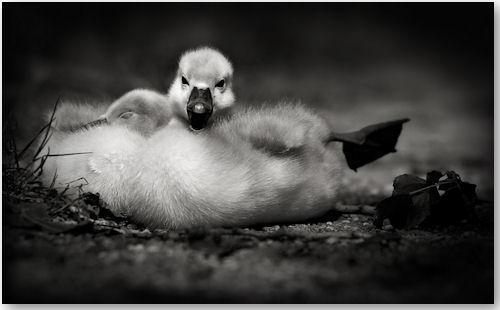 © Jeannette Woitzik