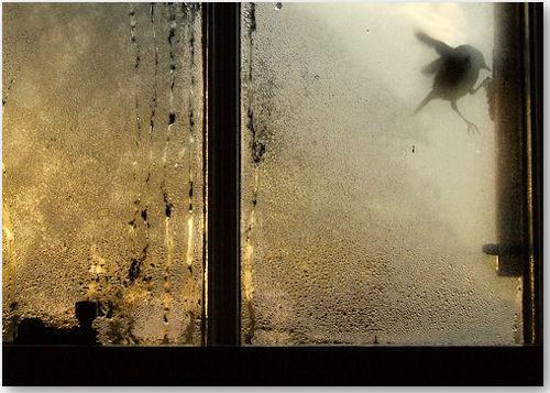 bluetit2 - © Kate Kirkwood