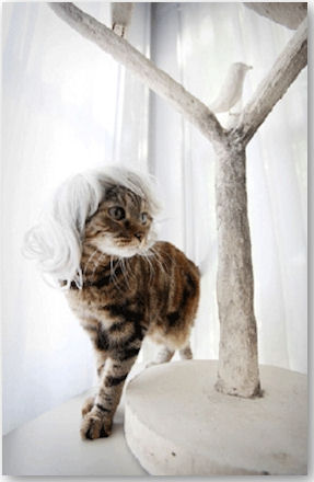 © Kitty Wigs