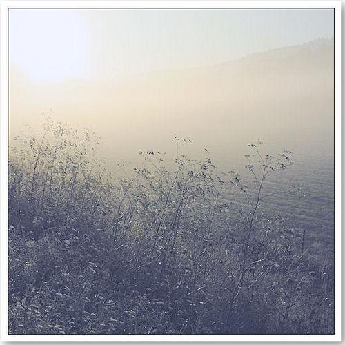 Morgendunst - © Liisa
