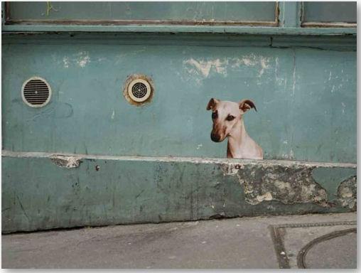 © sophie photographe