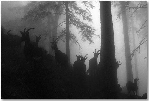 in the mist - © Stefan Loeliger