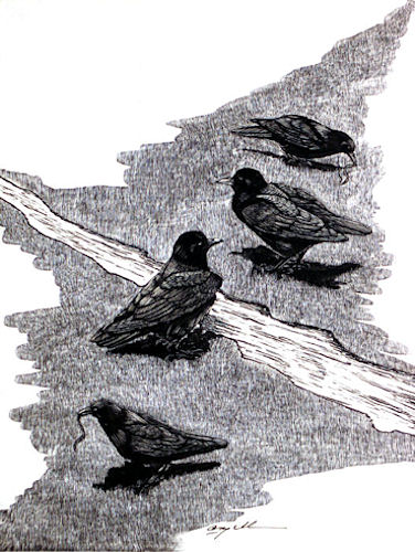 Male Crows with Mates Meet at Border of Their Territories - © Tony Angell