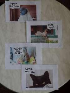 SPCA messages