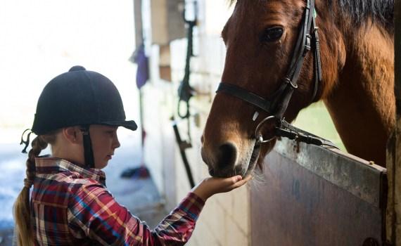 Do catalogs still work - equestrian supplies