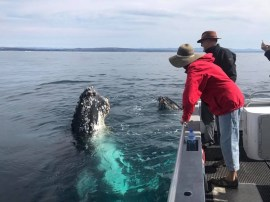 whale watching Narooma Tours