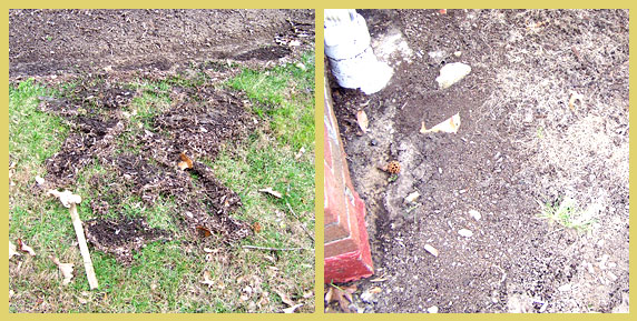 Examples of erosion in areas that are not mulched. On the right, you can see plant roots exposed.