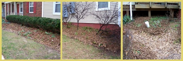 From left to right - front garden, side garden and back garden on January 4, 2016.