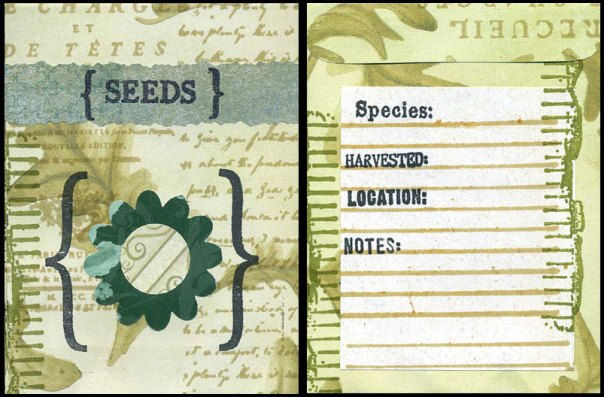 Front and back of decorated seed packet