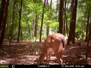 2015_REVIEWSAMPLE_MOULTRIE_A-7i_0020
