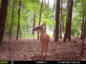 2015_REVIEWSAMPLE_MOULTRIE_A-7i_0023