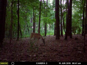 2015_REVIEWSAMPLE_MOULTRIE_A-7i_0075