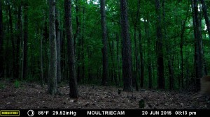 2015_REVIEWSAMPLE_MOULTRIE_M-990i-Gen2_0031