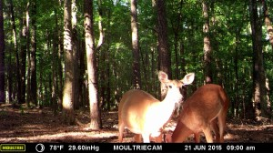 2015_REVIEWSAMPLE_MOULTRIE_M-990i-Gen2_0059