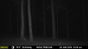 2015_REVIEWSAMPLE_MOULTRIE_M-990i-Gen2_0372