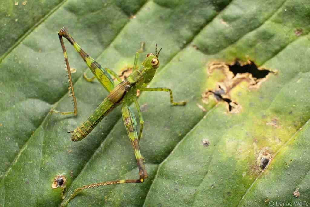 Macro photo of grasshopper