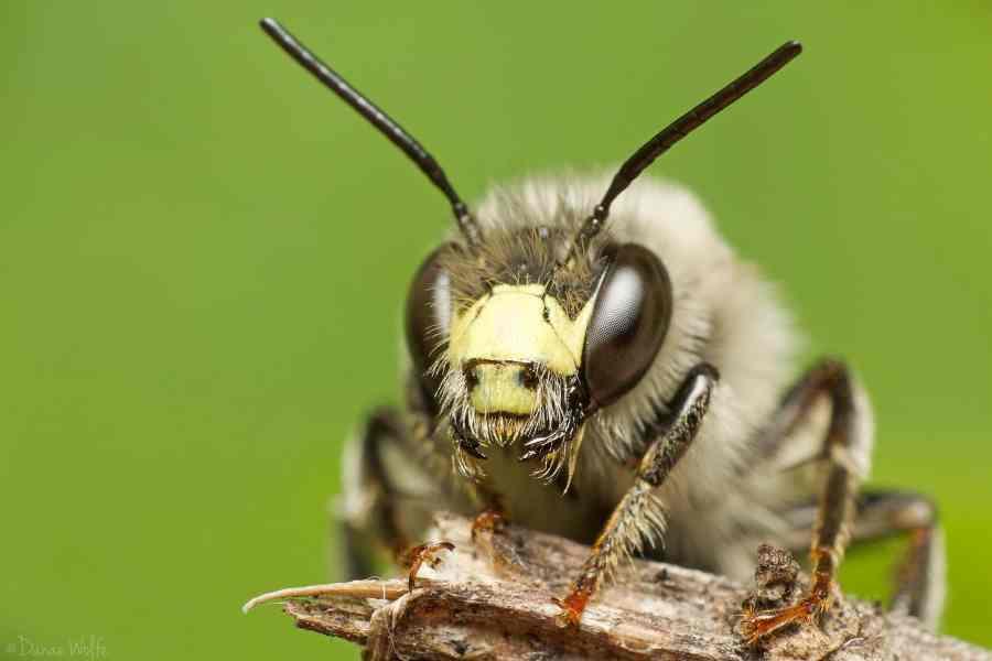 Bee on stick