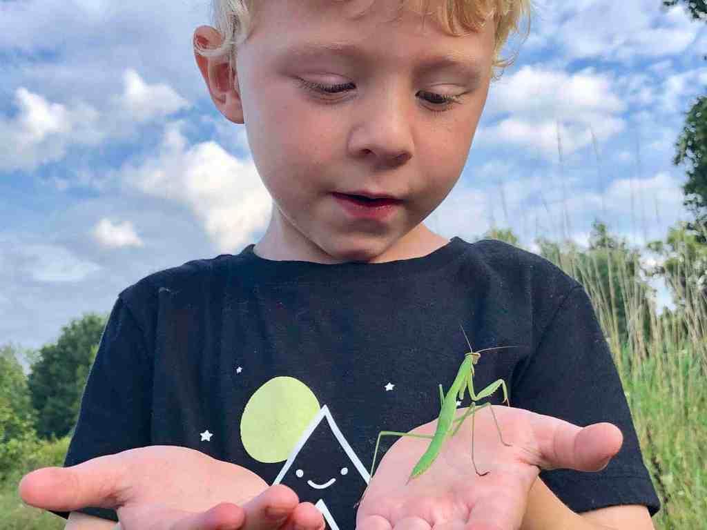 Young boy holding praying mantis