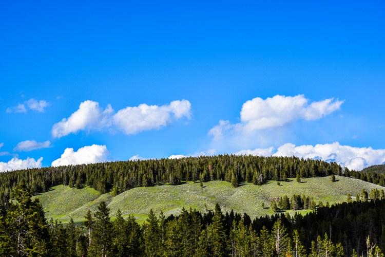Yellowstone 2014 635