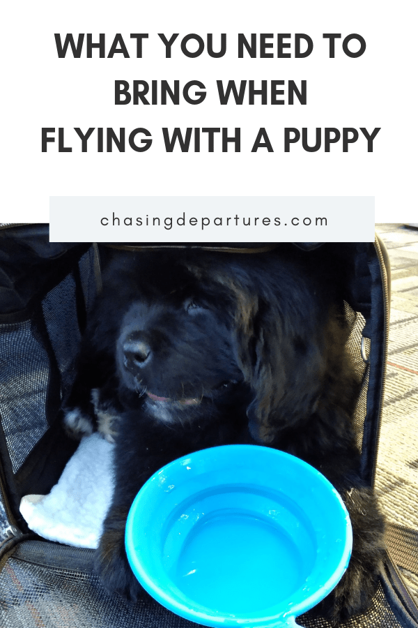 Flying with a Puppy: 10 Things You Need to Bring   When flying with a puppy, there are certain things you need to bring.   Chasing Departures   #pettravel #travel #travelingwithpuppy #flyingwithapuppy #pets #puppy