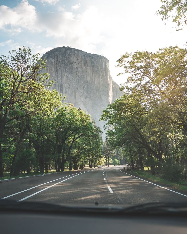Rock formations behind trees on road