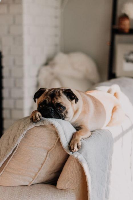 Make $100 By Pet Sitting