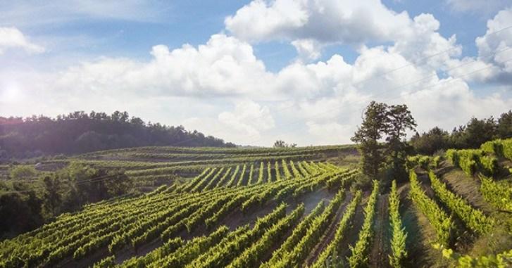 Croatian Wine Regions - Benvenuti winery