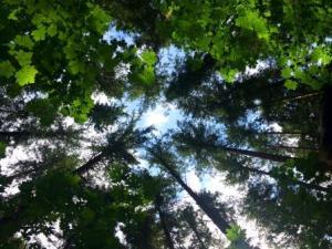 elk falls provincial park quinsam camp forest