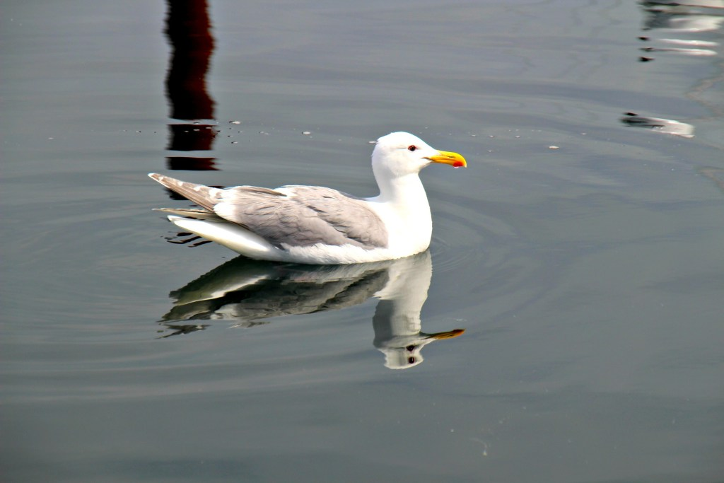 A gull also in on the gutting action