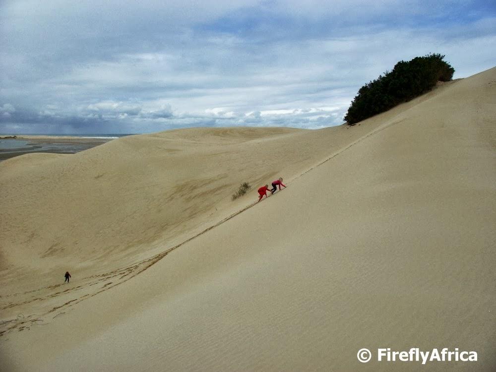 Maitland dune mountain