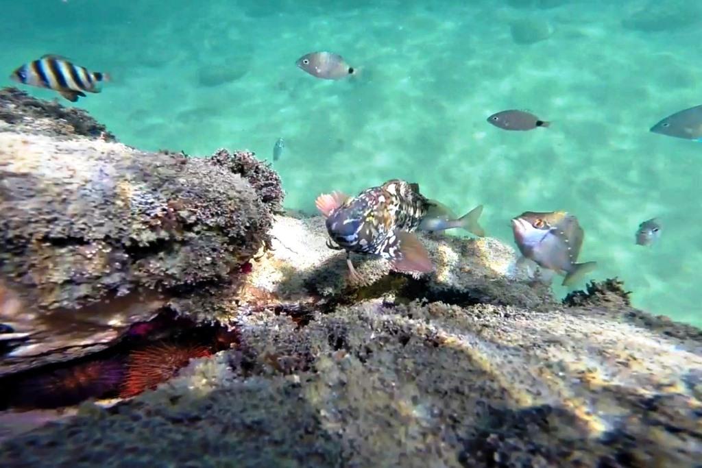 Under the water at Sardinia Bay