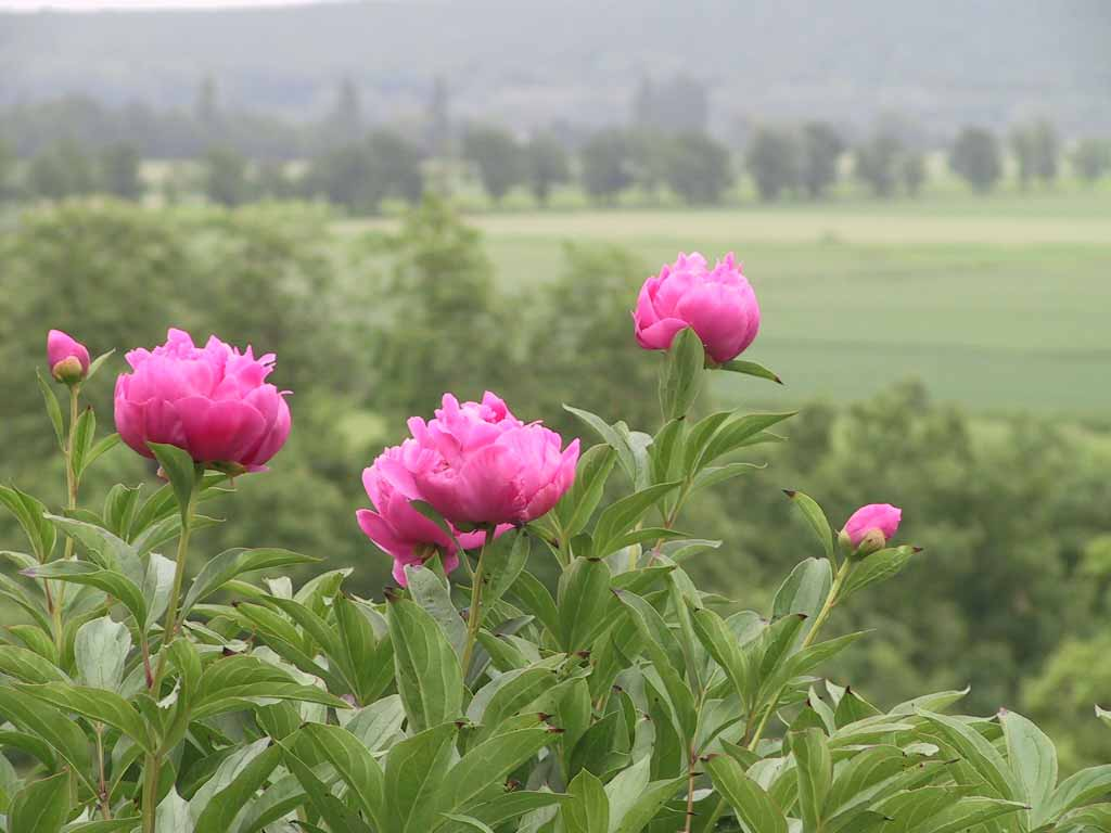 Etelan fleurs et jardins 014 ch teau d 39 telan for Fleurs et jardins