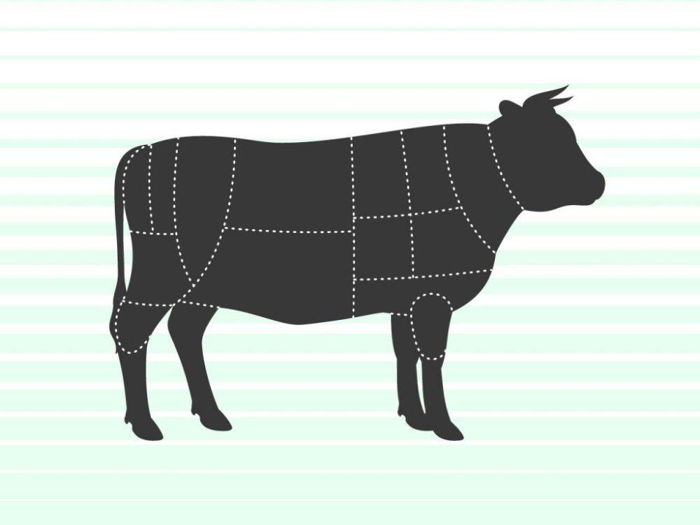 medium resolution of cow illustration with beef sections