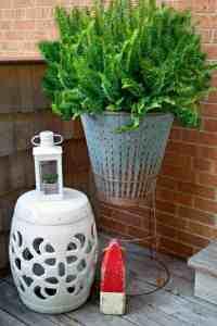 Tomato Cage Plant Stand