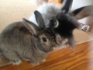 bunnies 2