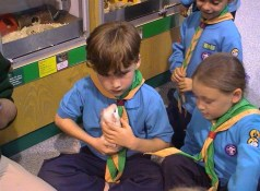 Beavers learning about pets