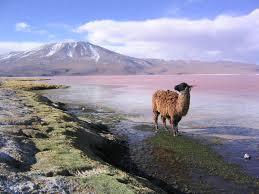 chatzona bolivia