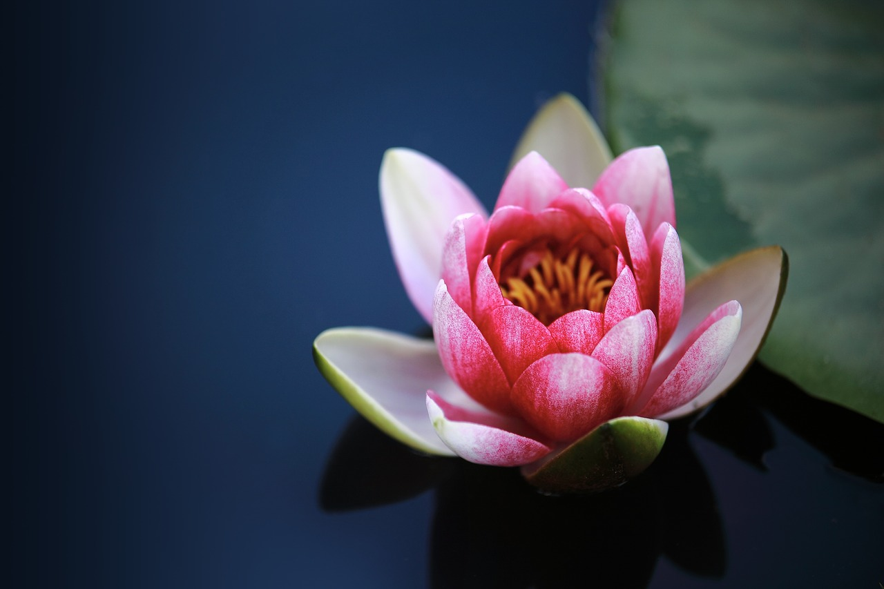 Chatsifieds water lilies words starts i