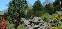Rockery & Strid
