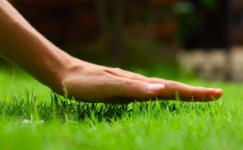 Touching Grass | Chattanooga Home Inspector | Lawncare Chattanooga