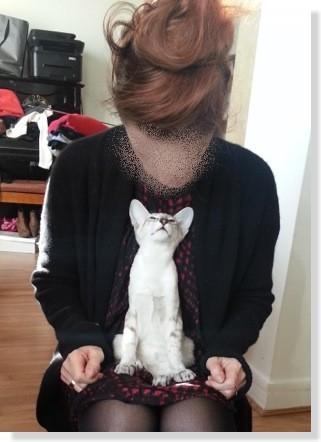 Ne serait-ce pas un chat amoureux de sa maîtresse ?