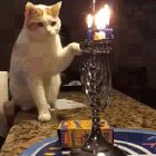 The goy cat who tried to steal Hanukkah
