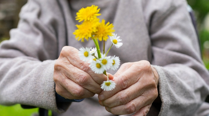 Closeup of the hands of an elderly woman holding a small bouquet of yellow wildflowers
