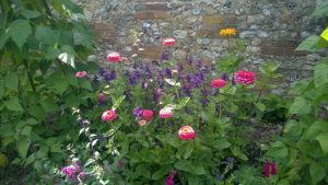 Zinnias in Walled Garden.jpg