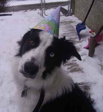 dog in a party hat, two bits