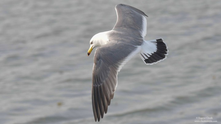 Gull's actions
