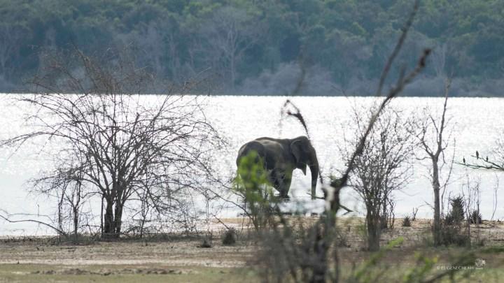 My first trip to Sri Lanka