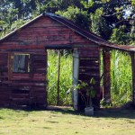 old-shed-dr